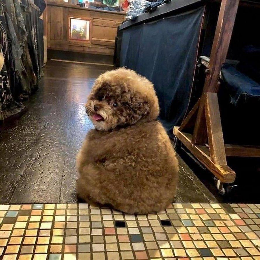 Il cucciolo in posizione seduta