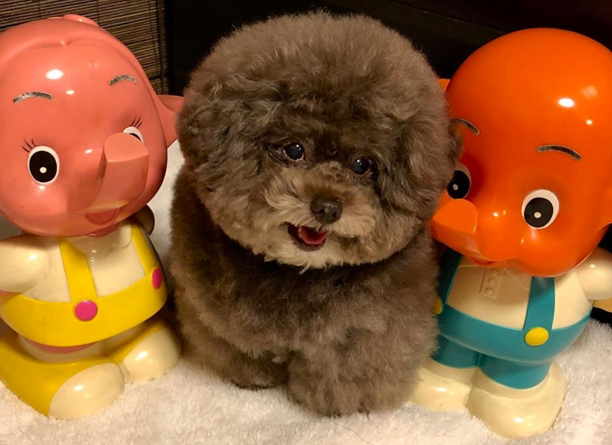 Kokoro il cane adorabile