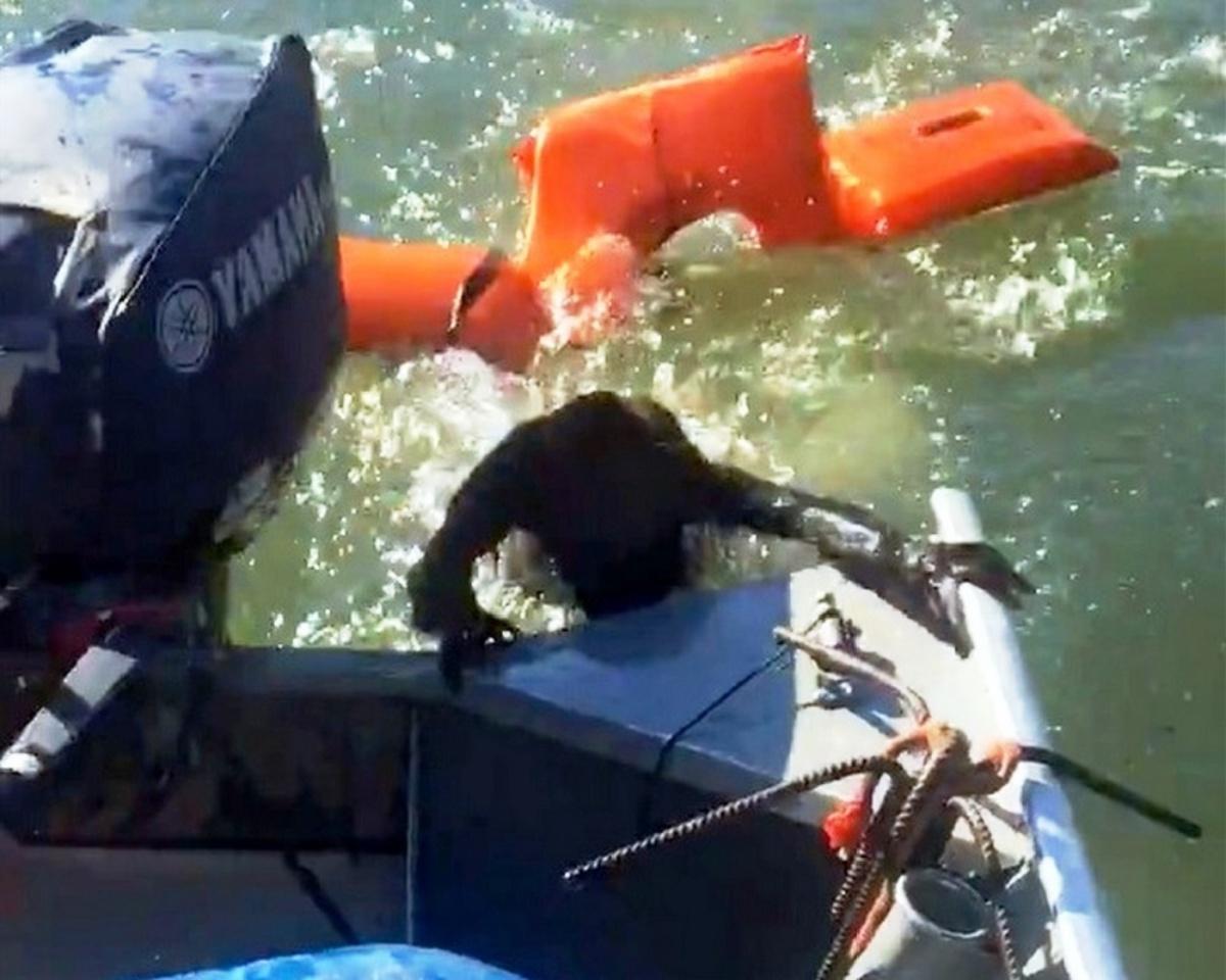 Il salvataggio della scimmia