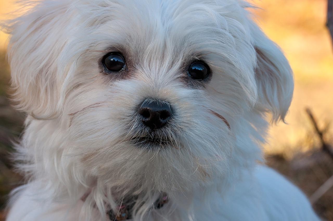 Lola la cagnolina rapita