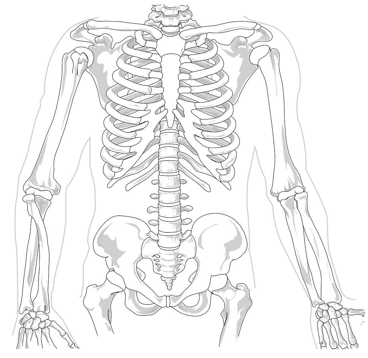 Immagine dello scheletro umano