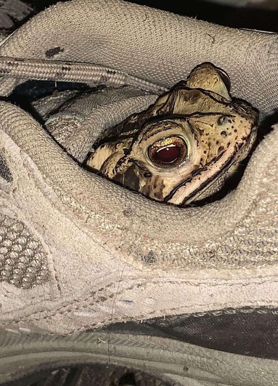 Un animale che vive nella scarpa
