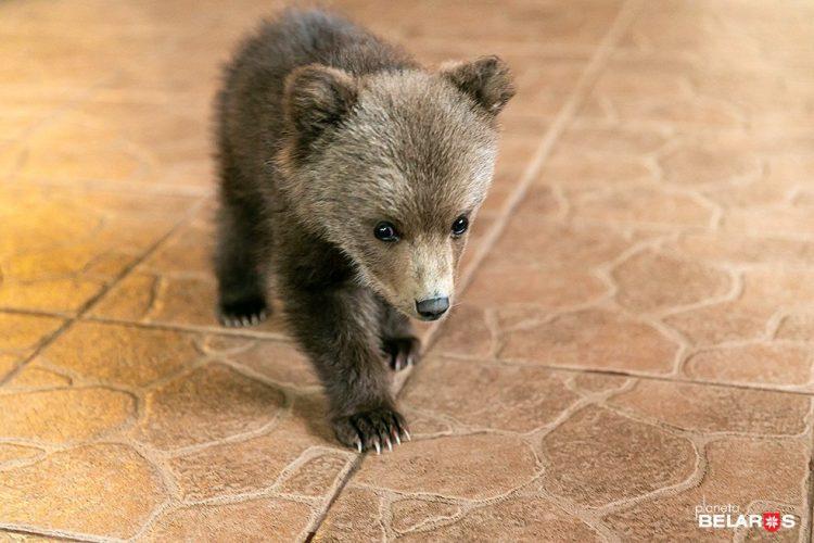 Cucciolo di orso in casa