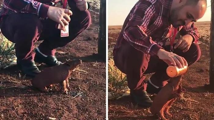 Uomo dà da bere a un animale selvatico