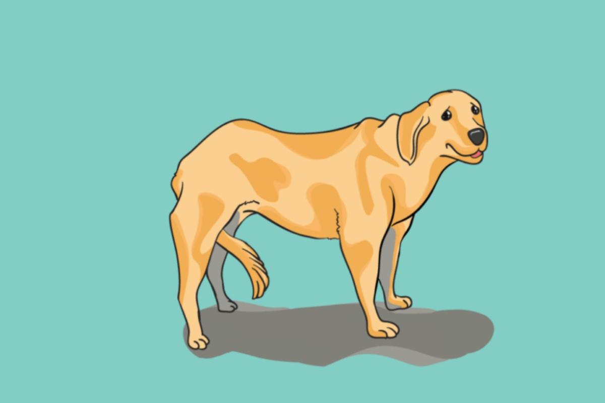 10 modi con cui il cane ti parla