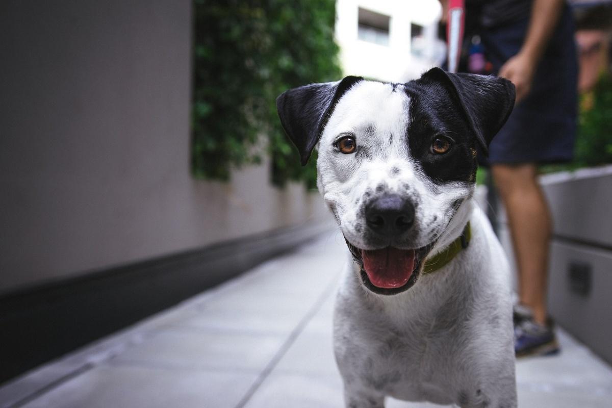 10 segnali che fanno di te un amante dei cani