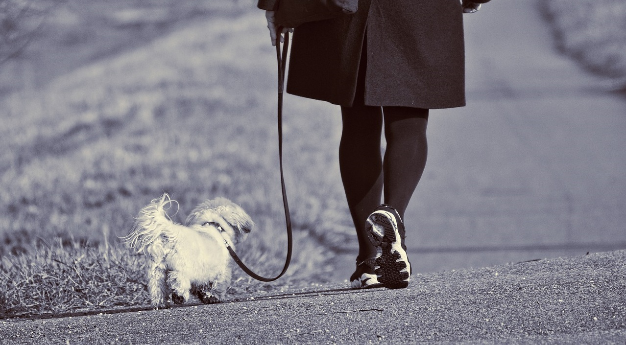 7 pericoli durante le passeggiate con il cane