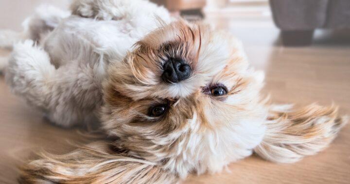 In caso di separazione, a chi viene affidato il cane?