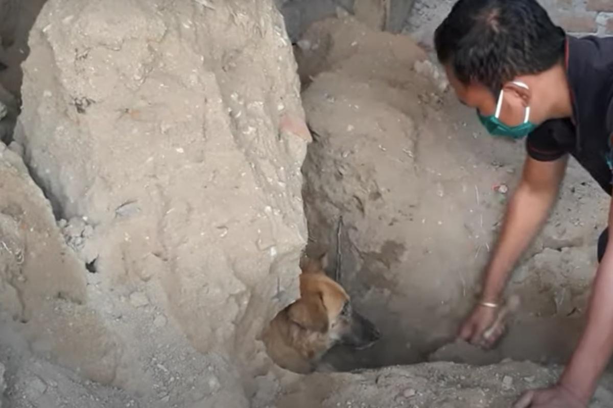 Il salvataggio di una cagna e dei suoi cuccioli