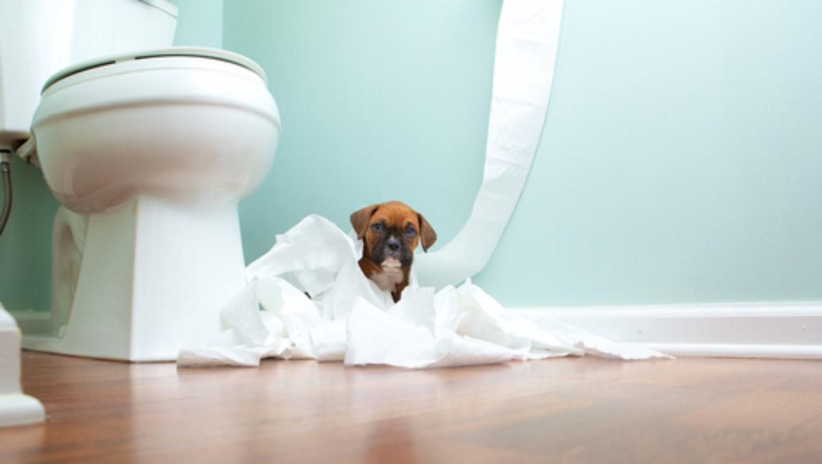 Gli oggetti pericolosi per il nostro cane