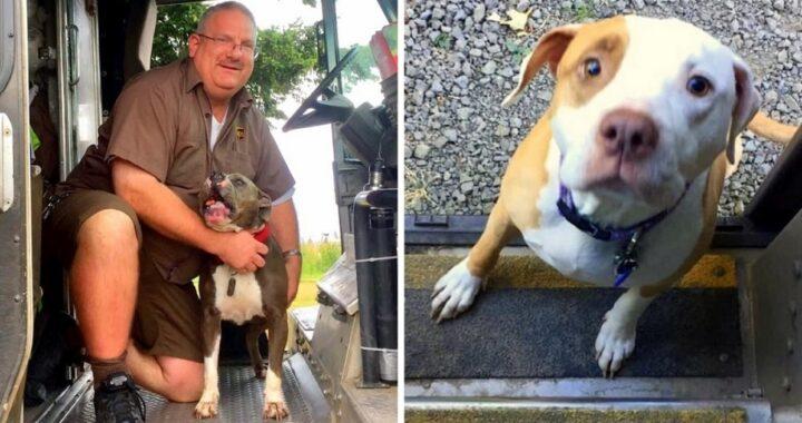 Il corriere UPS che fa amicizia con tutti i cani della città