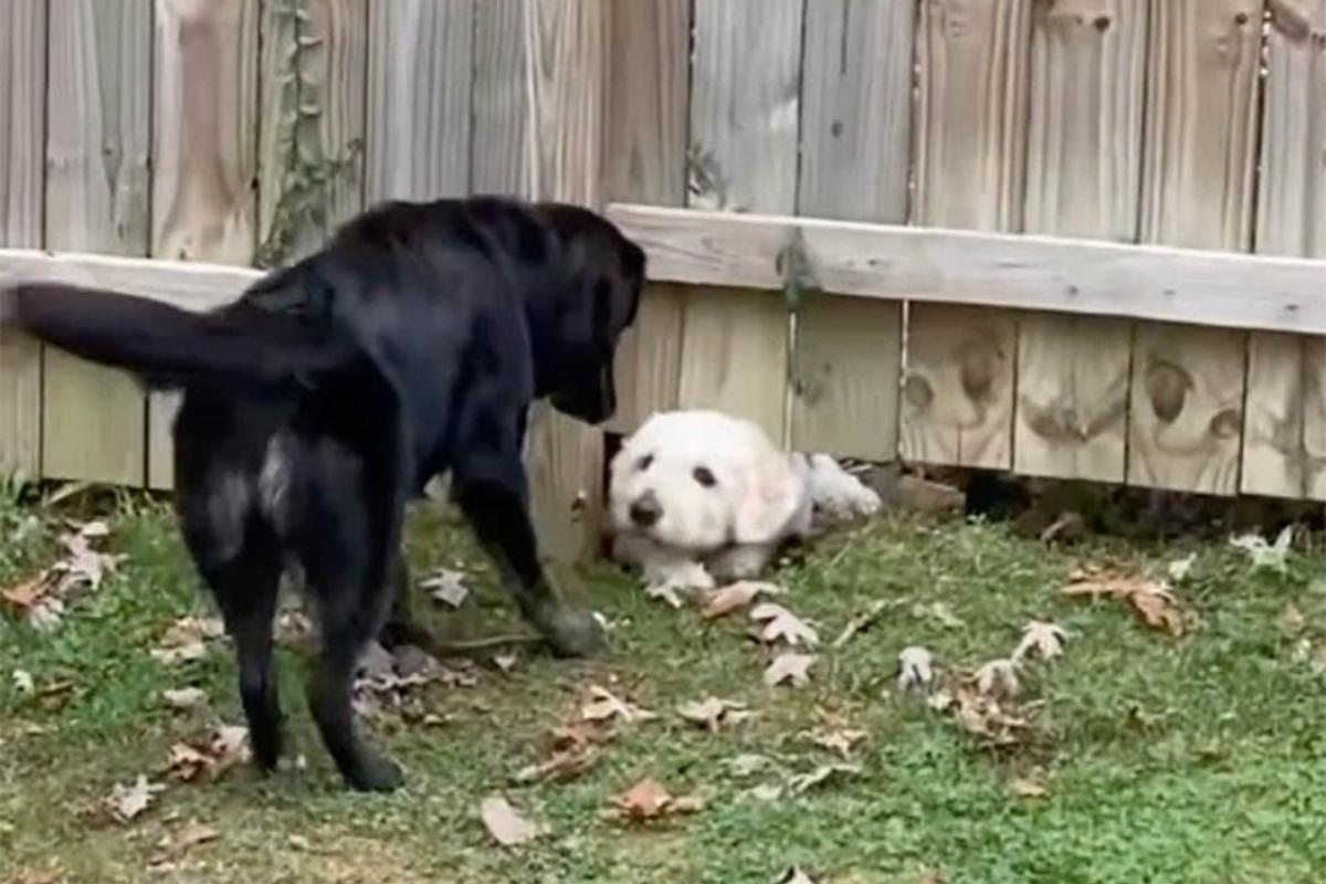 L'amicizia tra Dory e Tasso