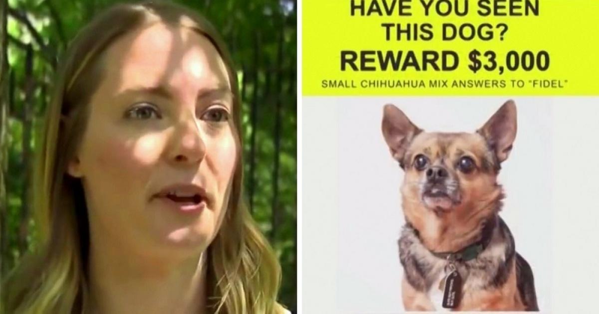 Fidel, il cagnolino rubato