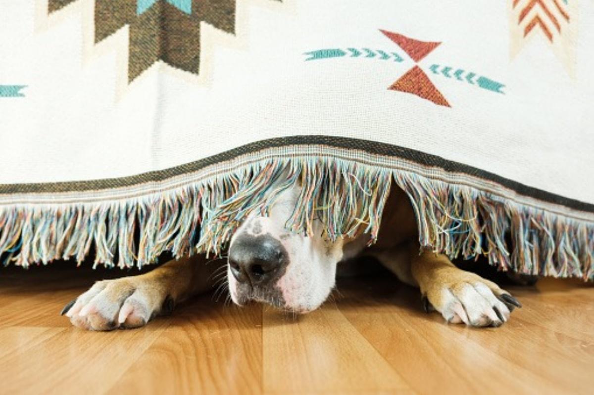 Mikka, la cagnolina morta a causa dei fuochi d'artificio