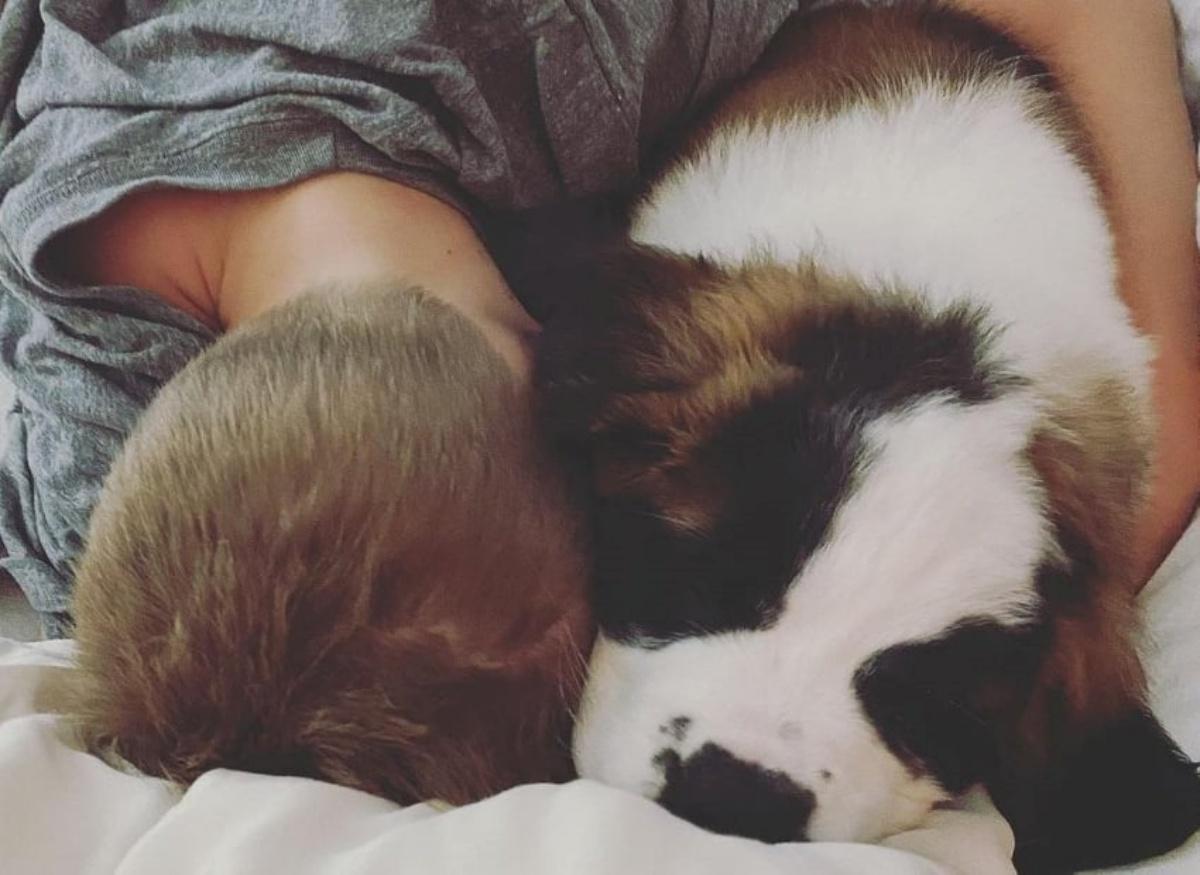 Hilary Duff accoglie un nuovo cucciolo