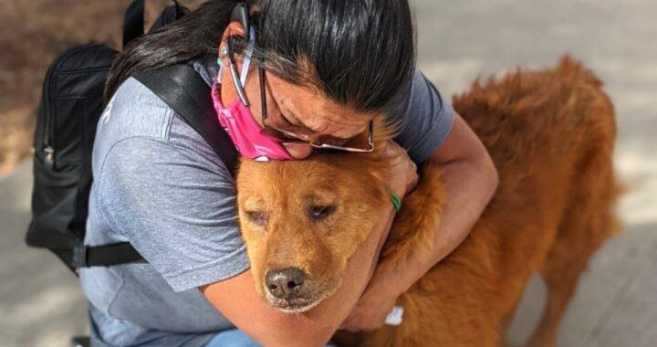 La storia di Honey, il cane smarrito e ritrovato dopo 7 lunghi anni
