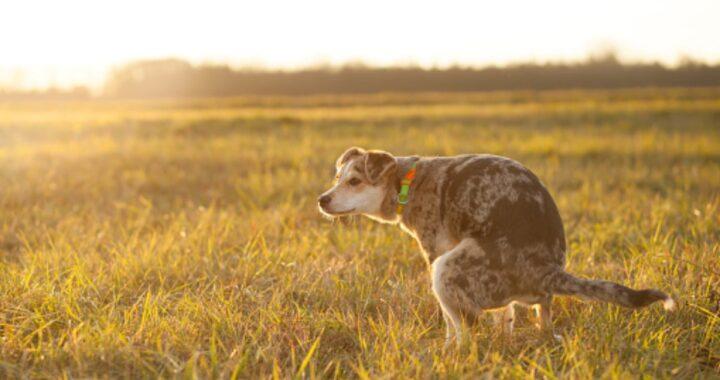Perché i cani mangiano la cacca e quando bisogna preoccuparsi