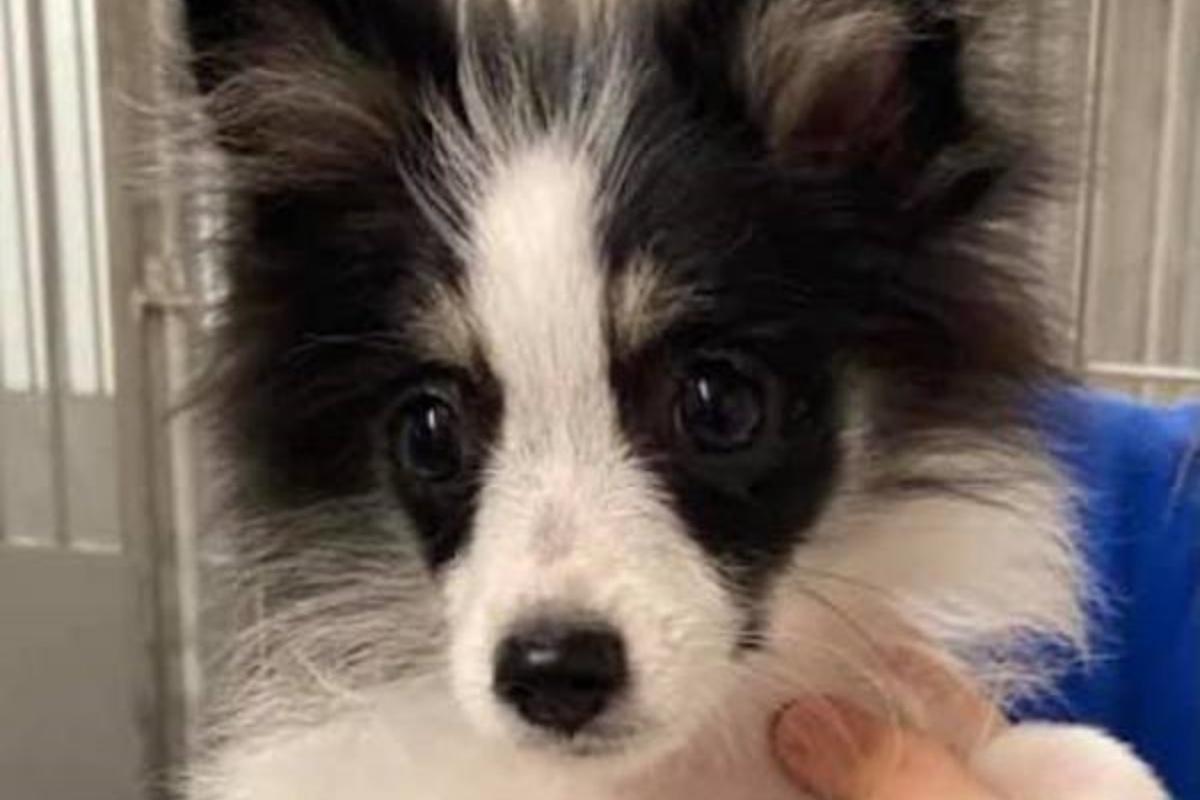 La storia della cagnolina Josie