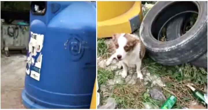 Mamma cane gettata vicino ai bidoni della spazzatura con i suoi 5 cuccioli