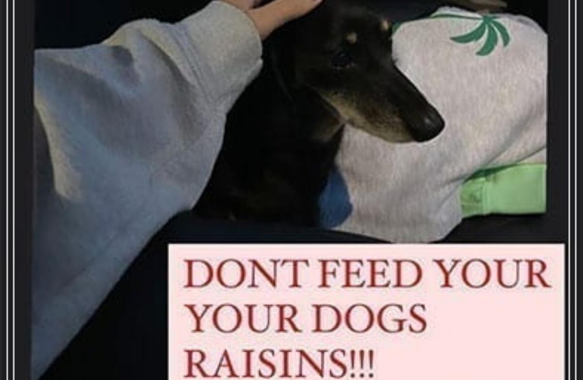 Michelle Keegan avvertimento cani