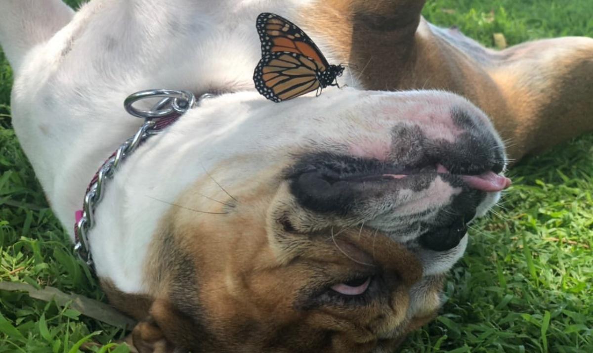 Muffin e la farfalla