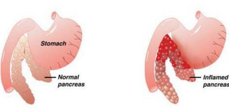 Funzioni pancreas nel cane