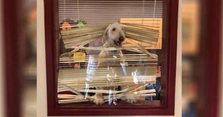 Sandy nell'ufficio del preside