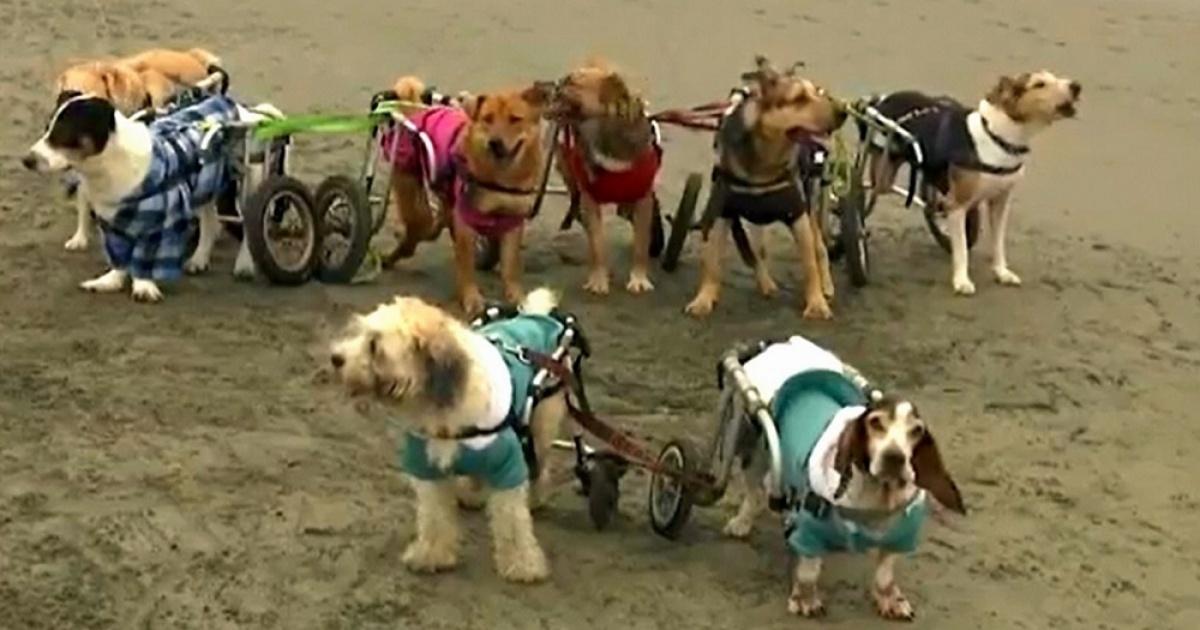 Sara Moran e i cani disabili