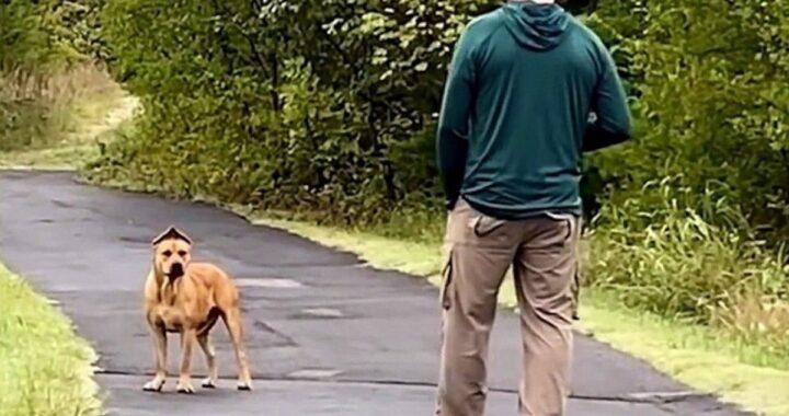 Abbandonato dalla sua famiglia, Scooby viene salvato da una coppia