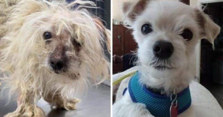 La trasformazione di Scruffy