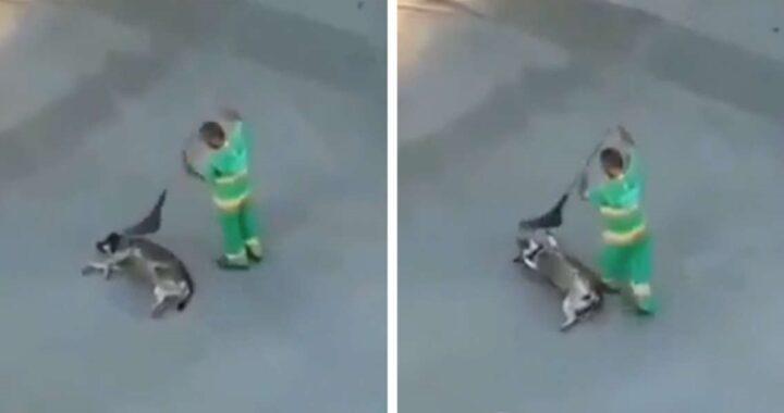 Il gesto gentile di uno spazzino nei confronti di un cane randagio