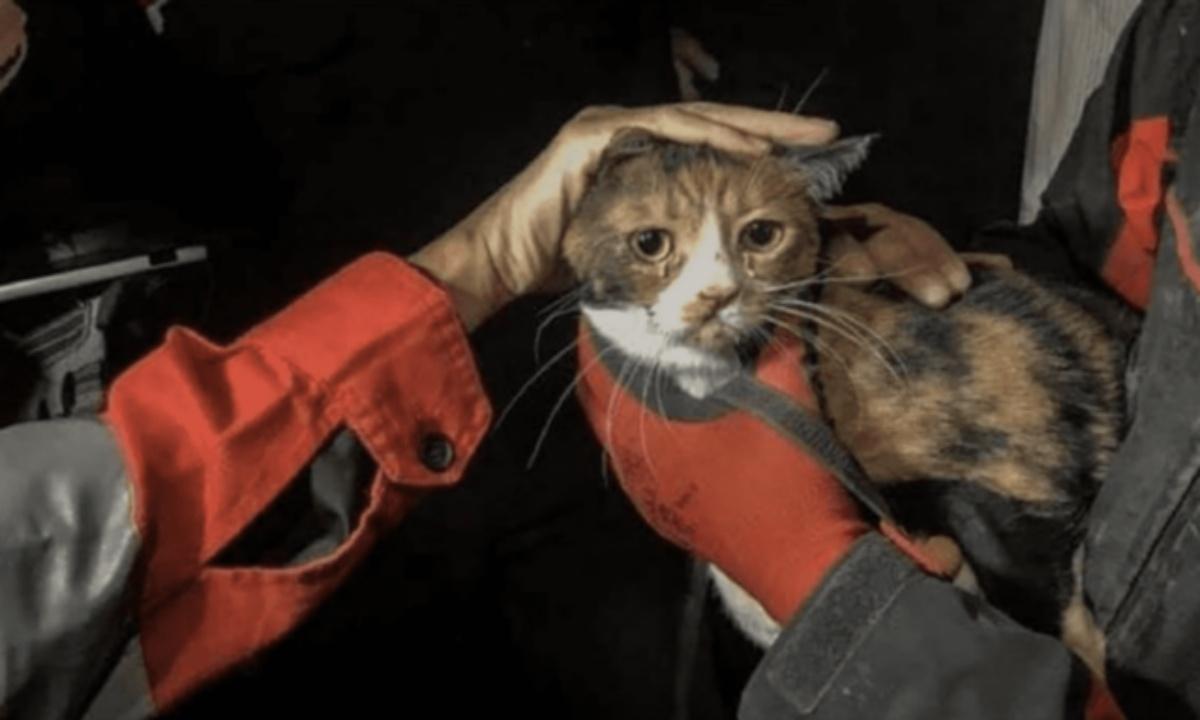 Umut, il gattino salvato da sotto le macerie
