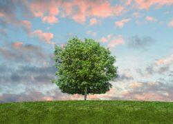 abitudini-per-vivere-green