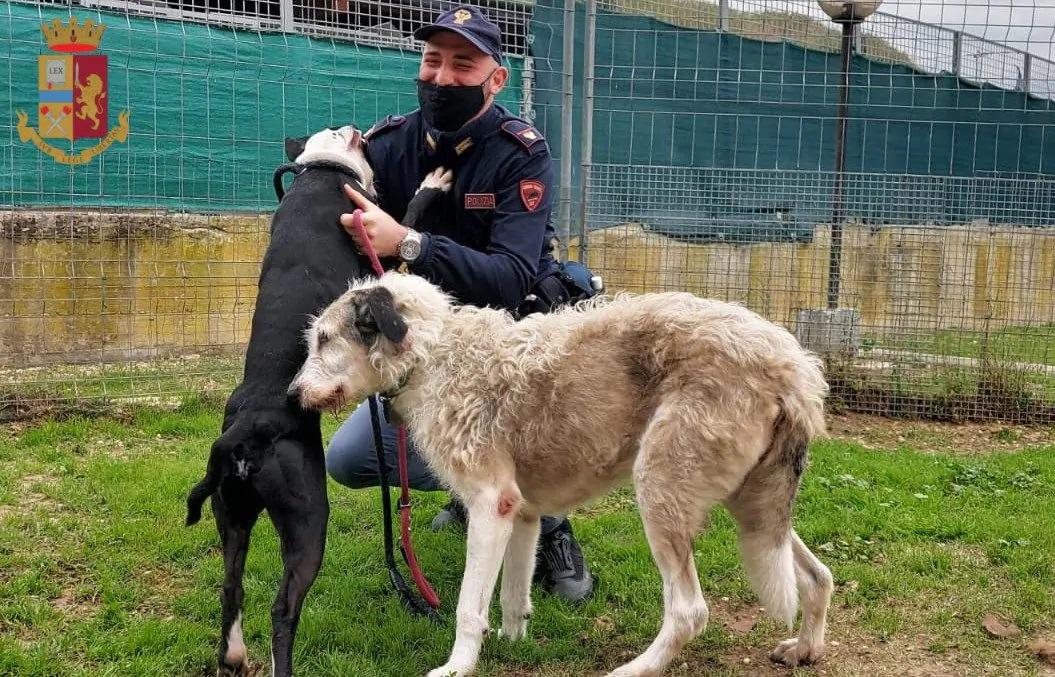 Il salvataggio di due cuccioli