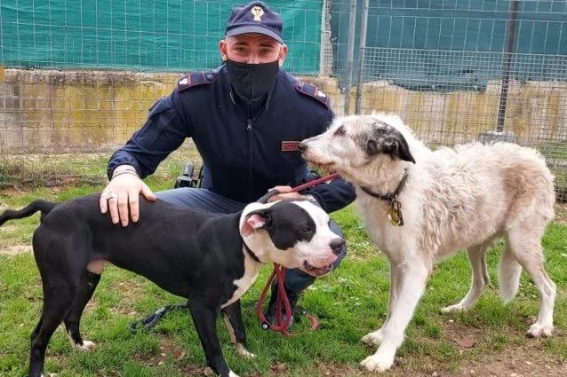 I poliziotti e i due cuccioli salvati