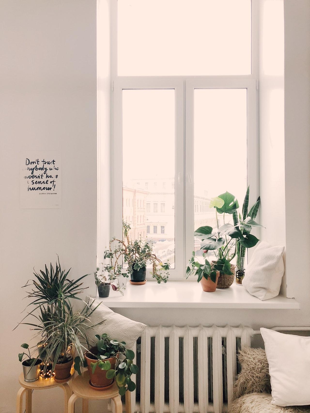 arredare-con-le-piante-finestra