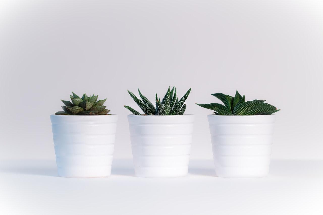 arredare-con-le -piante -idee