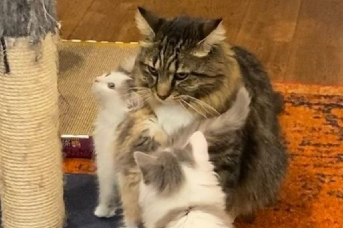 beast aiuta gattini