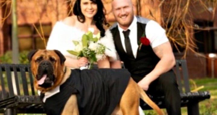 bruce cancro matrimonio