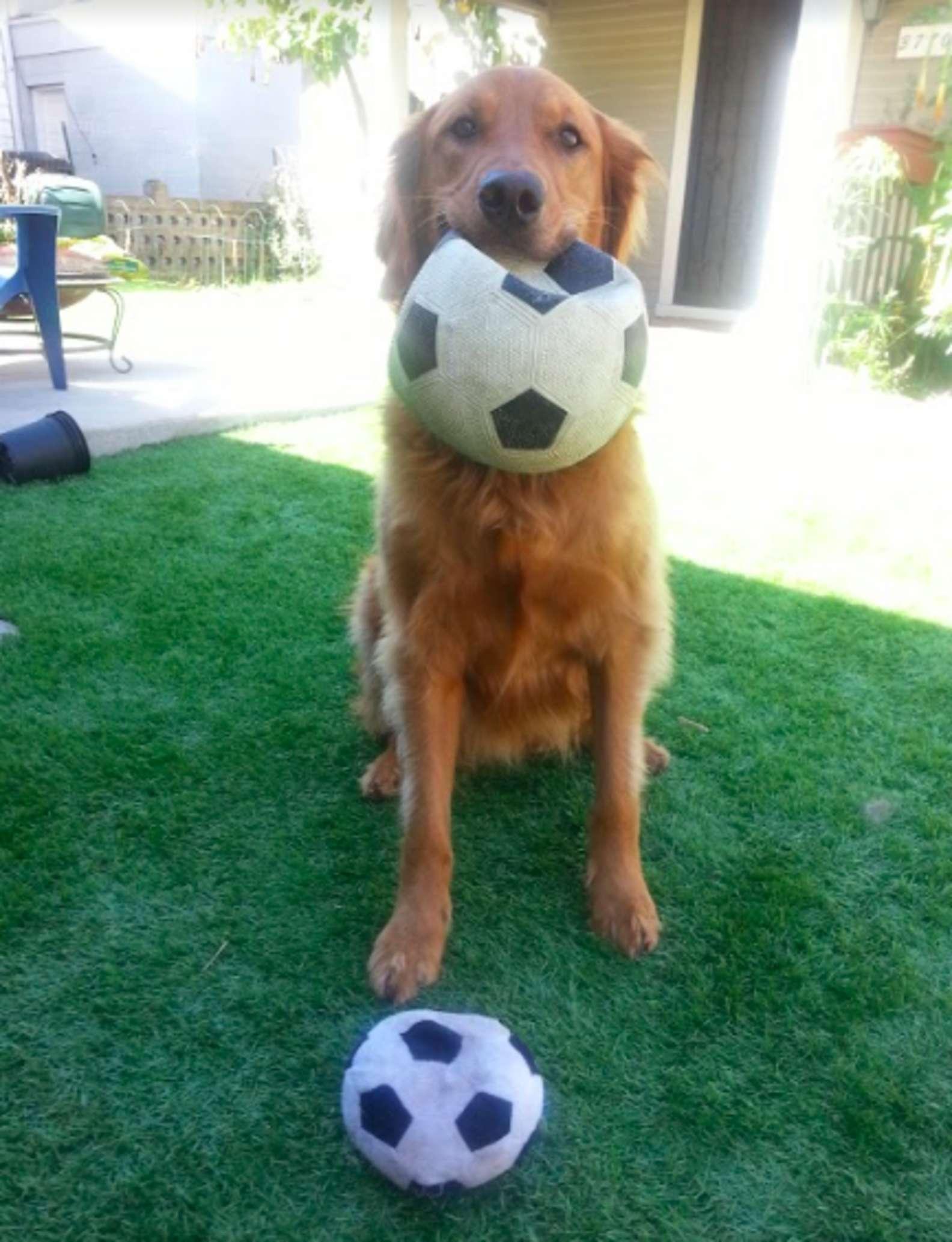 Il cucciolo di nome Buster