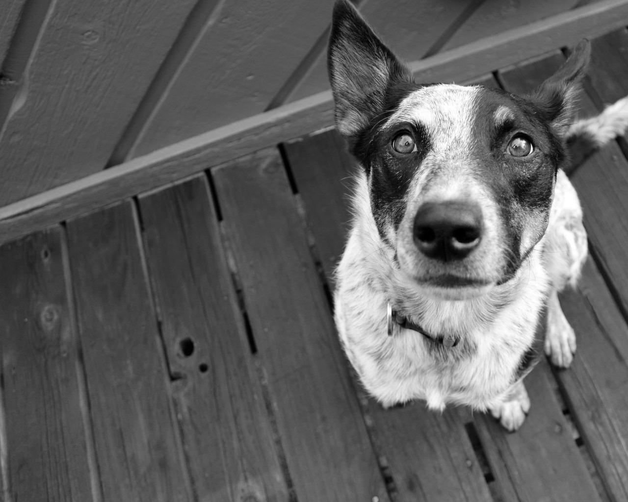 cane con le zampe storte