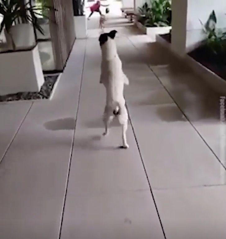 Modo di camminare del cucciolo