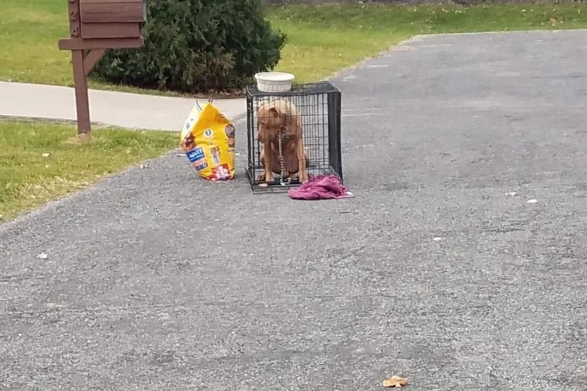 cane abbandonato gabbia