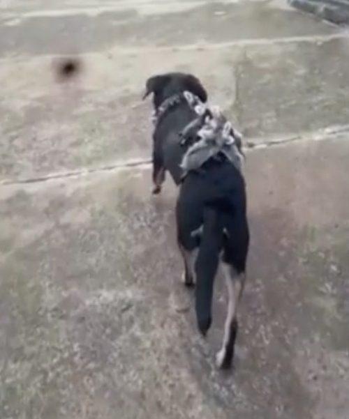 Cane adotta animali selvatici