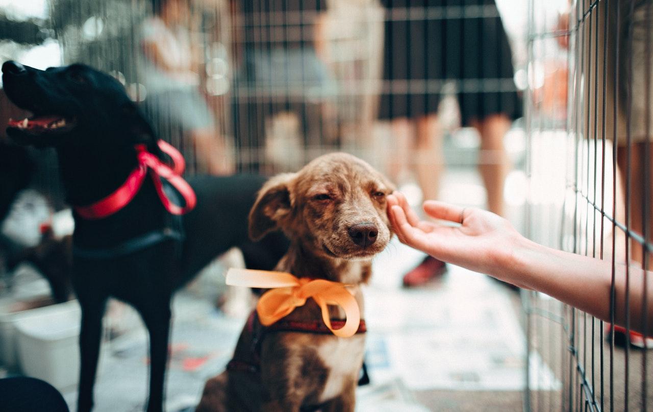 errori-da evitare-con il- cane-comportamenti