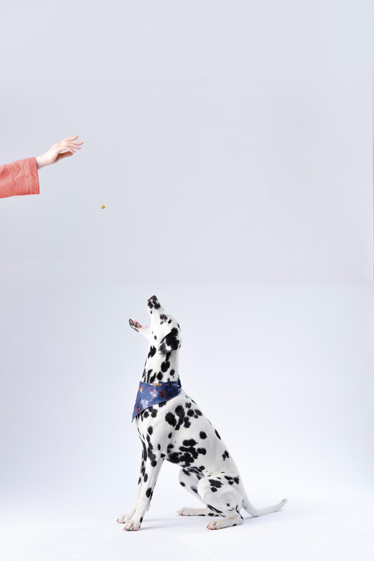 cane-ricompensa