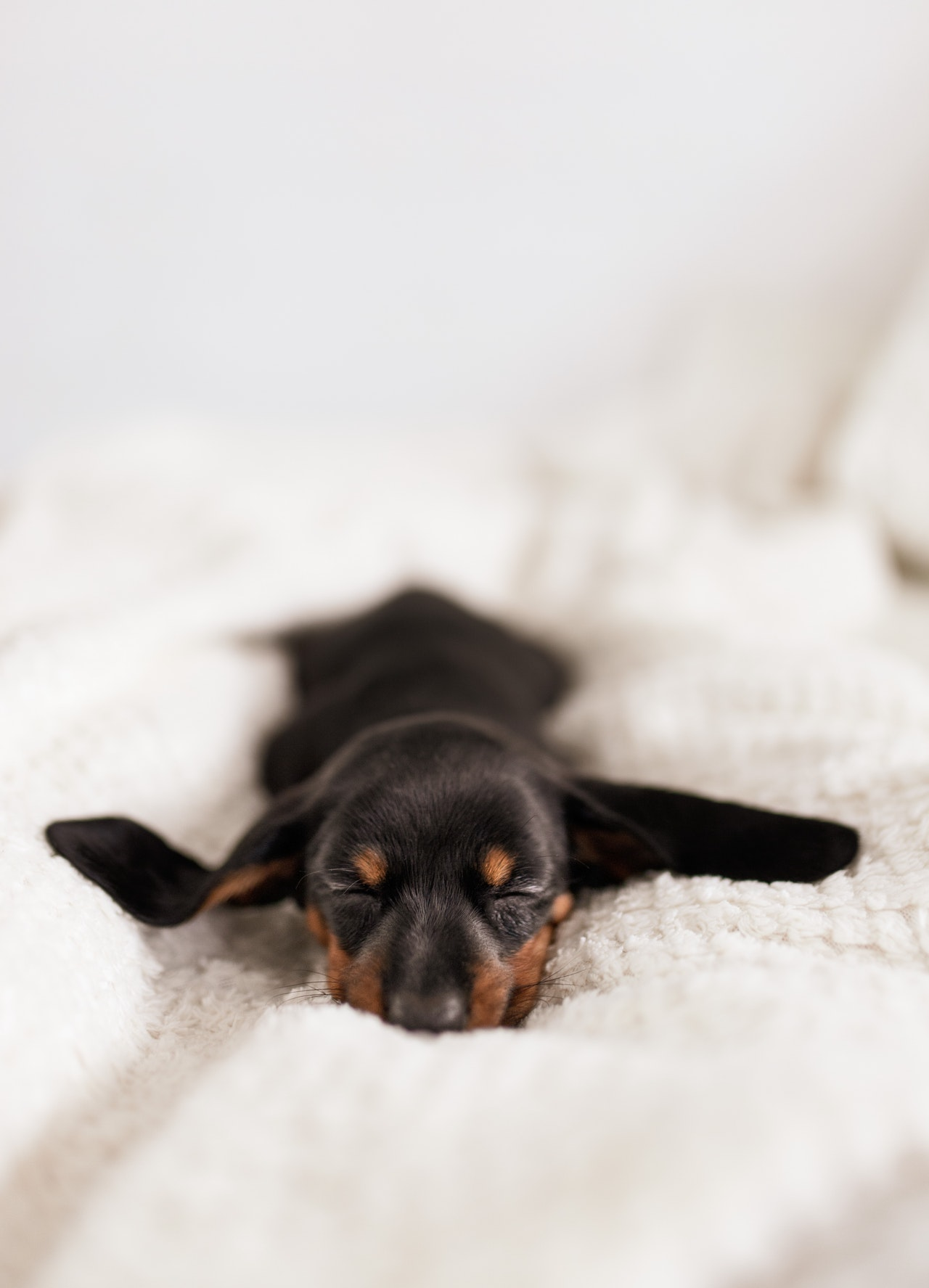 cane-sul-letto-casa
