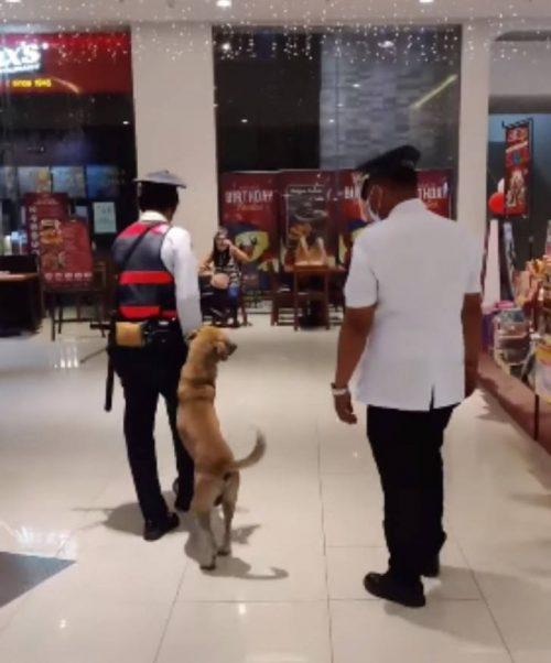 Cane riposa nel centro commerciale