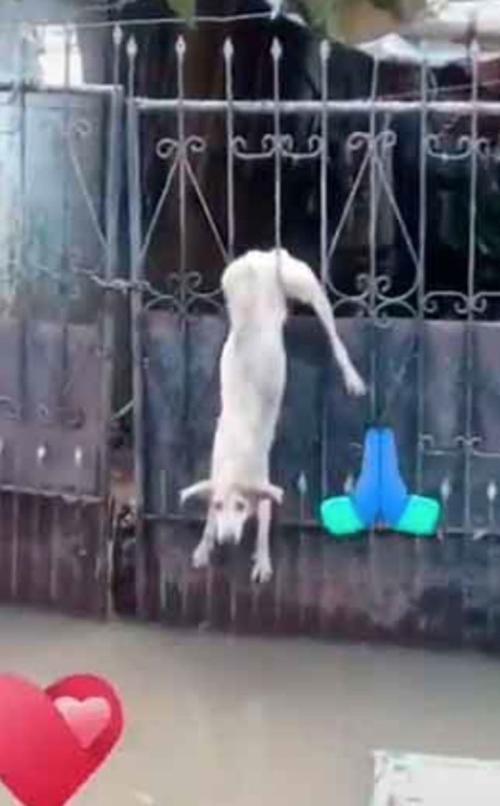 Cane appeso a una recinzione