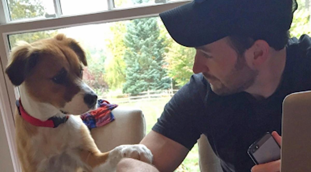 Chris Evans e adozione nel rifugio